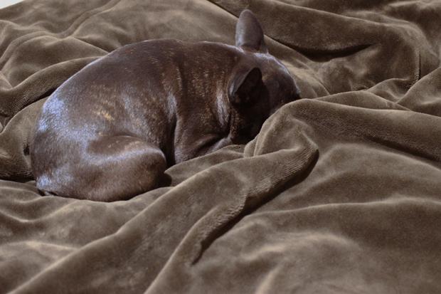 毛布と一体