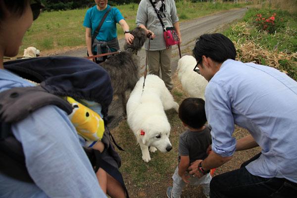 9.大型犬と紬
